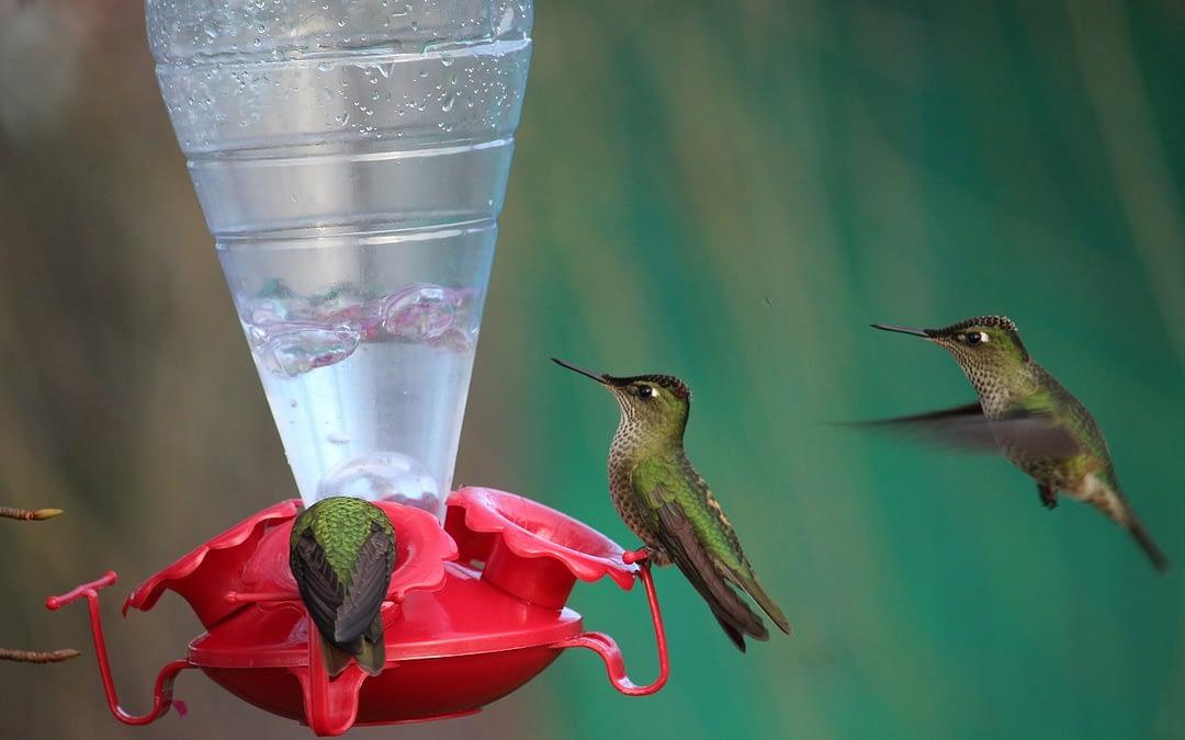 Concurso de Fotografía de Aves ya tiene ganadores!