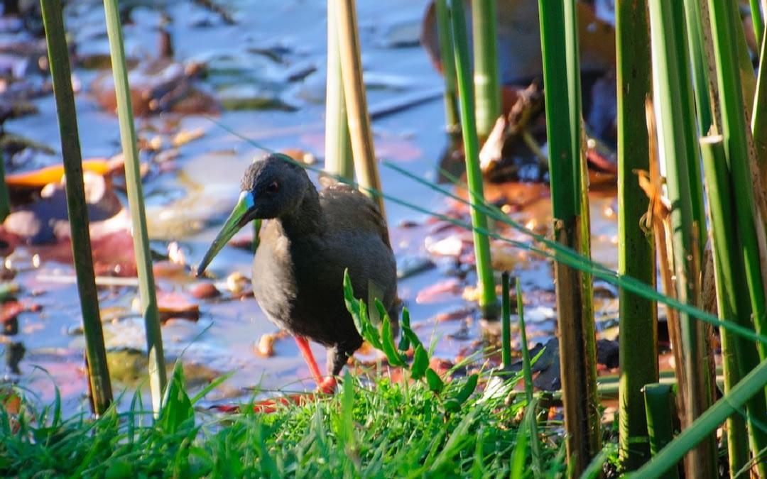 Equipos de 5 regiones participaron avistando aves en el Pajareo Extremo 2021